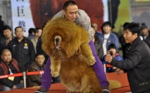 chinadog