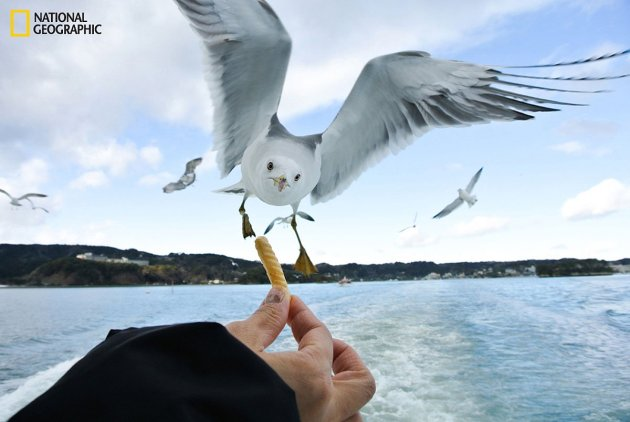 this-photographer-was-able-to-snap-the-exact-moment-a-hungry-seagull-was-about-to-snap-up-his-french-fry